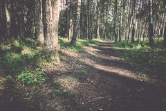 Clean forest road Stock Photography