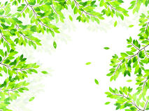 Clean fresh green background illustrations Royalty Free Stock Photos