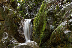 Clean Fresh Water Stream Flowing. Down mountain in green jungle through rocks stock image