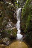 Clean Fresh Water Stream Flowing Stock Images