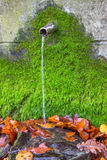 Clean fresh water from water source with green moss Royalty Free Stock Photos
