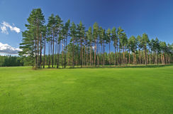 Clean green field and pines royalty free stock images