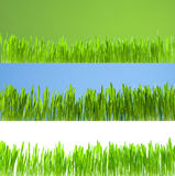 Clean Growing Fresh Grass On White, Blue And Green Royalty Free Stock Photography