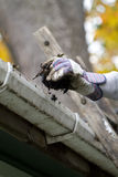 Clean Gutter Close Up. A close up shot of a person cleaning the gutter.shallow depth of field Royalty Free Stock Photos