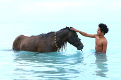 Clean horse. Man washing his horse in the sea Stock Photos