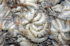 Clean octopuses Royalty Free Stock Photo