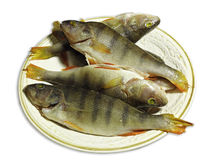 Clean perch Royalty Free Stock Images