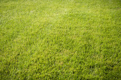 Clean piece of meadow Royalty Free Stock Photos