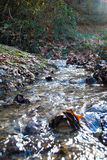Clean river in forest Stock Photo