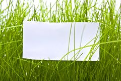 Free Clean Sheet In Green Grass Royalty Free Stock Photo - 14183235