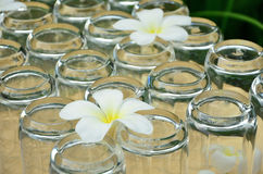Clean sparency glass. White flowers on the glass bottom Stock Photography