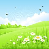 Clean spring amazing scenery. Vector illustration Royalty Free Stock Images
