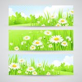 Clean spring amazing scenery. Vector illustration Stock Images