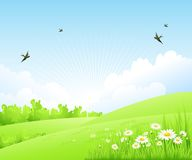 Clean spring amazing scenery. Vector illustration. Clean spring amazing scenery. Vector nature landscape Royalty Free Stock Photo