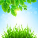 Clean spring amazing scenery. Vector illustration. Clean spring amazing scenery. Vector nature landscape Royalty Free Stock Photos