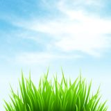 Clean spring amazing scenery. Vector illustration Royalty Free Stock Photography