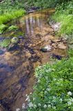 Clean summer  river in nature reserve forest Royalty Free Stock Image