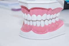 Clean teeth denture, dental cut of the tooth, tooth model, and dentistry instruments in dentist`s office. Tooth care Royalty Free Stock Photography