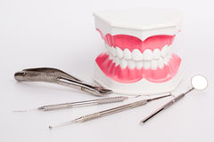 Clean teeth denture, dental jaw model Royalty Free Stock Photos