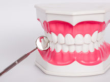 Clean teeth denture, dental jaw model Royalty Free Stock Photography