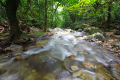 A clean water stream in rainforest Royalty Free Stock Images