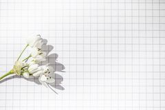 Clean white paper squared sheet and a small flower, copy text place stock image