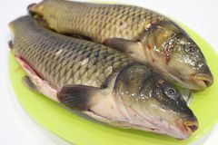 Cleaned carps on a light green dish, which lies on a white table close-up royalty free stock photography