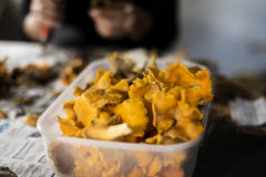 Cleaned chanterelles Stock Image