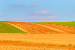 The cleaned farmer field. Royalty Free Stock Image