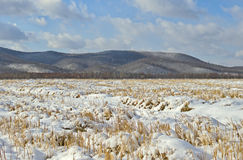 The cleaned fields covered with snow Royalty Free Stock Photography