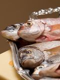 Cleaned fresh fish on the plate Stock Photography