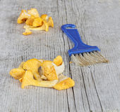 Cleaned group of chantarelles and a brush Stock Photography