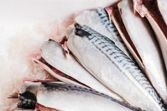 Cleaned and gutted mackerel Royalty Free Stock Images