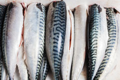 Cleaned and gutted mackerel Royalty Free Stock Photography