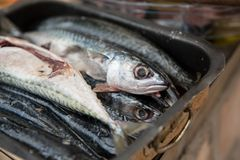 Cleaned sea fish prepared and ready to be cooked on a grill. Cleaned sea fish in a pot. Healthy food. Food preparation. royalty free stock image