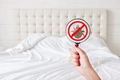 Cleaness和纯净概念 有红色修指甲举行透镜的无法认出的女性有中止昆虫标志的查出床铺臭虫 没有臭虫Th 图库摄影