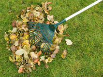 Cleaning of autumn leaves Royalty Free Stock Image