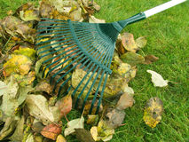 Cleaning of autumn leaves Royalty Free Stock Photography