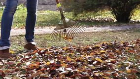 Cleaning of autumn leaves stock video footage