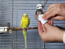 Cleaning Bird Cage Royalty Free Stock Image