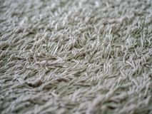Cleaning carpet stock image