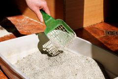 Cleaning cat litter box. Hand is cleaning of cat litter box with green spatula. Toilet cat cleaning sand cat stock image