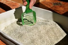 Cleaning cat litter box. Hand is cleaning of cat litter box with green spatula. Toilet cat cleaning sand cat. Cleaning cat excrement. Hand holding plastic Stock Photography