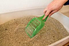Cleaning cat litter box. Hand is cleaning of cat litter box with green spatula. Toilet cat cleaning sand cat. Cleaning cat excrement. Hand holding plastic Royalty Free Stock Photo