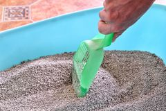 Cleaning cat litter box. Hand is cleaning of cat litter box with green spatula. Toilet cat cleaning sand. Man hand and cat litter box. Kitty litter. Plastic Royalty Free Stock Image