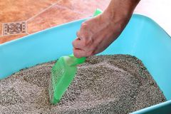 Cleaning cat litter box. Hand is cleaning of cat litter box with green spatula. Toilet cat cleaning sand. Man hand and cat litter box. Kitty litter. Plastic Stock Photography
