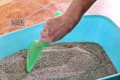 Cleaning cat litter box. Hand is cleaning of cat litter box with green spatula. Toilet cat cleaning sand. Man hand and cat litter box. Kitty litter. Plastic Royalty Free Stock Images