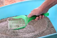 Cleaning cat litter box. Hand is cleaning of cat litter box with green spatula. Toilet cat cleaning sand. stock images
