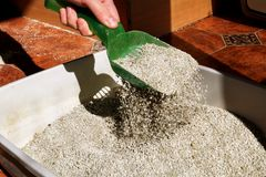 Cleaning cat litter box royalty free stock images