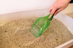 Cleaning cat litter box stock image